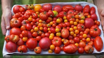 5 причини да настъргвате доматите